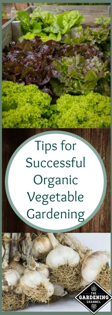 top organic vegetable gardening tips