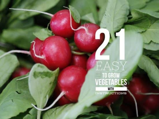 21 easy to grow vegetables