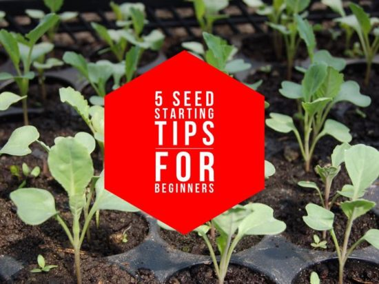 Seed starting: 5 tips for beginner success