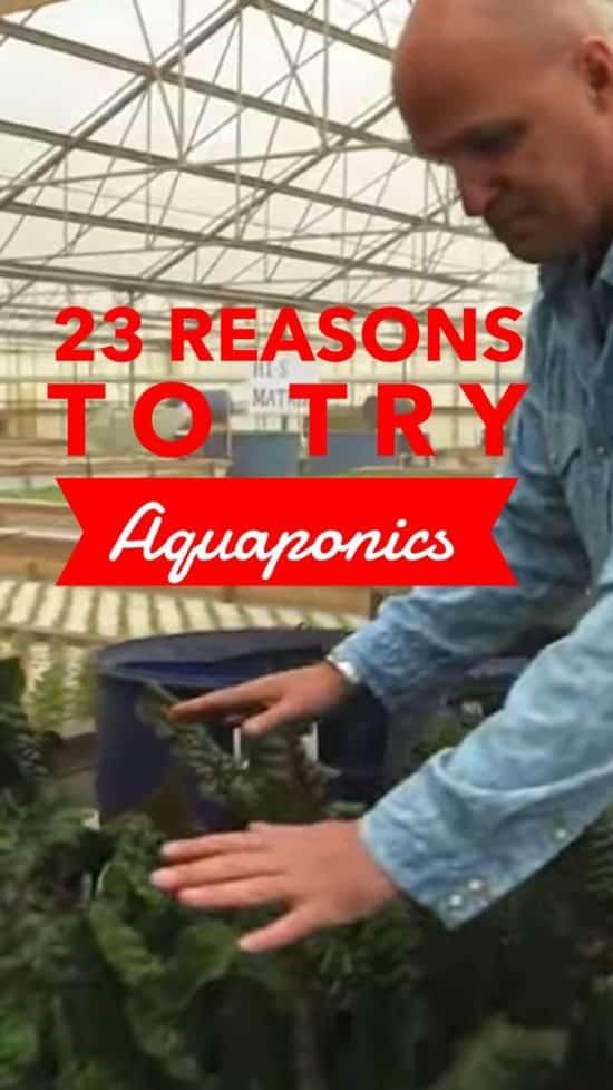 learn aquaponics gardening